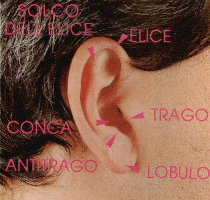 Figura 2 - Conformazione dei padiglione auricolare, ha forma di questo è determinante per il riconoscimento della direzione di provenien za del suono.
