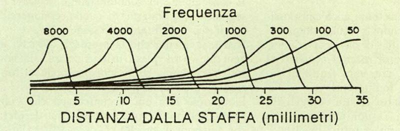 Figura 8 - Punti di massima ampiezza di vibrazione della membrana basale per differenti fre quenze del suono. (Tratta da Guyton A.C., «Trattato di fisiologia medica», Piccin Editore).