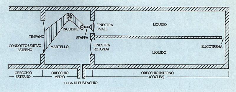 La localizzazione delle sorgenti sonore audioreview - Finestra rotonda e ovale ...